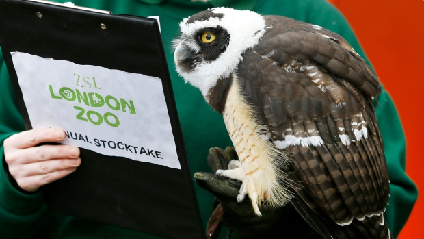 British zoos start annual critter count