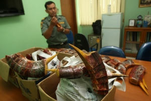 Indonesian forestry ministry officials show stacks of hornbill's beaks confiscated from four Chinese nationals, during a press conference in Jakarta, Indonesia, Monday, Jan. 7, 2013. (AP Photo/Tatan Syuflana)