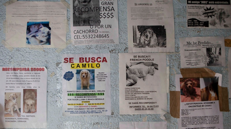 Posters of missing dogs blanket a wall at the animal shelter in the hilltop borough of Iztapalapa in southeast Mexico City, Tuesday, Jan. 8, 2013. (AP / Eduardo Verdugo)