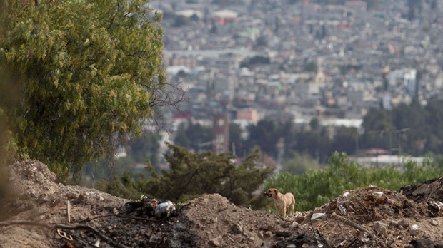 Wild dogs suspected in fatal attacks in Mexico