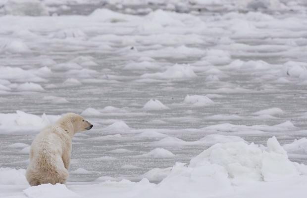 Winter ice Hudson Bay