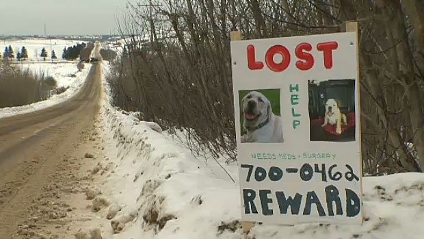 The Bairds believe someone may be stealing dogs, including two of their own, after discovering more than a dozen dogs have gone missing in the outskirts of Edmonton since December.