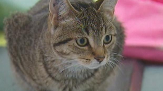 Undated file photo of a cat
