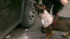 Police dog Teak released