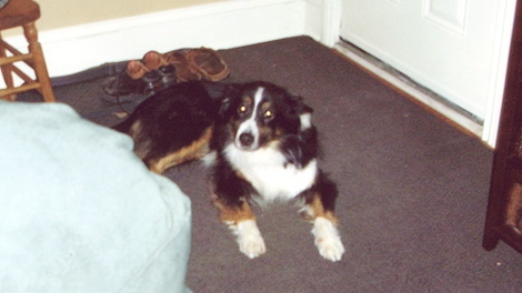 Bailey, a young border collie, was choked to death after getting caught in a kill trap at a Smiths Falls golf course.