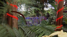 Vancouver's Bloedel Conservatory is hoping to attract more visitors with a Christmas display. Dec. 20, 2010. (CTV)