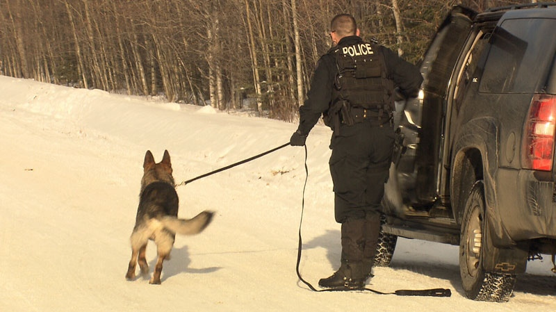 A police dog unit is seen in this undated CTV News file photo.