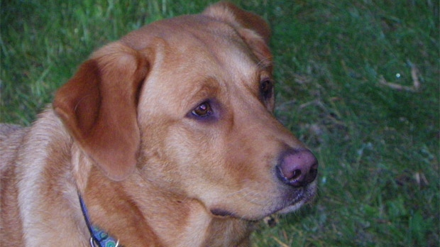 The dog Murphy was attacked by a rabid skunk in south Winnipeg at the end of December 2012.