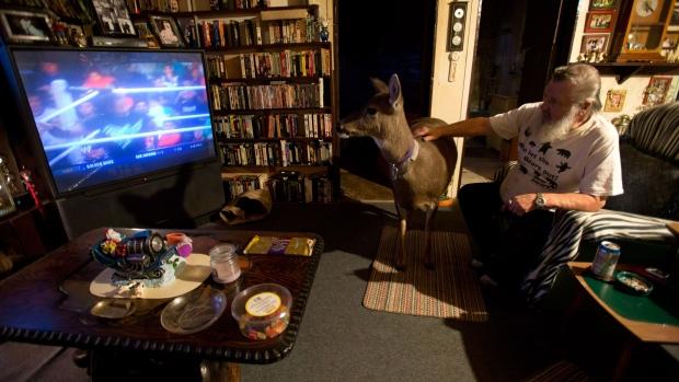B.C. woman allowed to keep pet deer