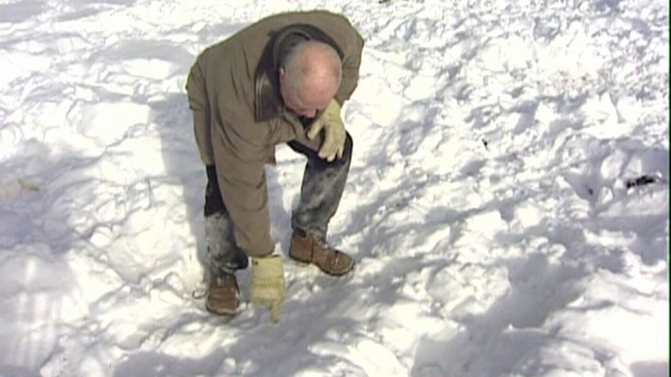 Wally Serger points out the tracks the bison left on his property near St. Clement, Manitoba on Sunday, Jan. 20, 2013.