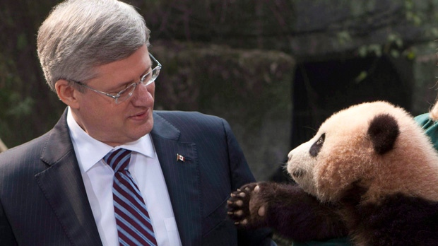 A panda reaches for Prime Minister Stephen Harper during a photo at the Chongqing Zoo in Chongqing, China on Saturday, Feb. 11, 2012. (The Canadian Press/Adrian Wyld)