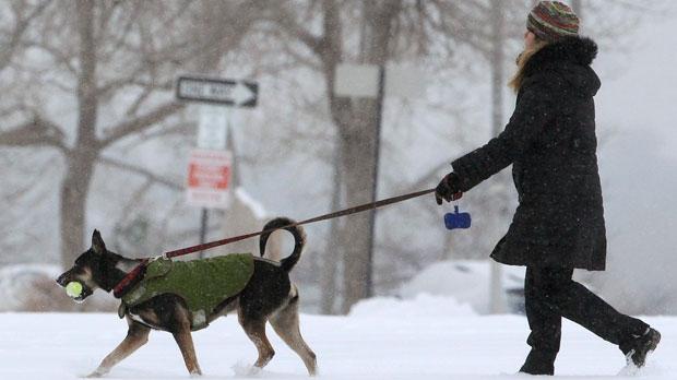 Dog cold pets