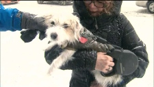 Cold weather for pets