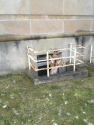A deer that was later freed is seen caught in a window well at the Regional Mental Health Care Centre in St. Thomas, Ont. on Wednesday, Jan. 23, 2013. (Courtesy Elgin County OPP)