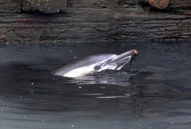 Dolphin stranded in Brooklyn canal