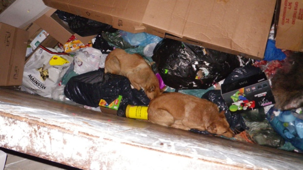 Dogs For Adoption Windsor On Spca