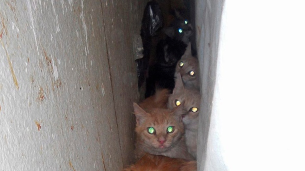 Cats removed from filthy home