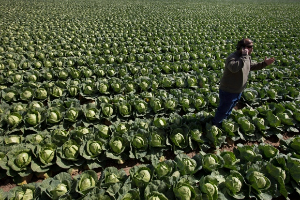 Leafy greens top source of food poisoning