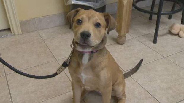 Jingles, a 13-week-old SPCA dog, just completed a training term at the Central Nova Scotia Correctional Facility.