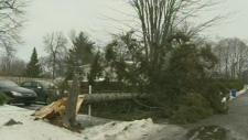 Strong winds brought down a tree in Montreal