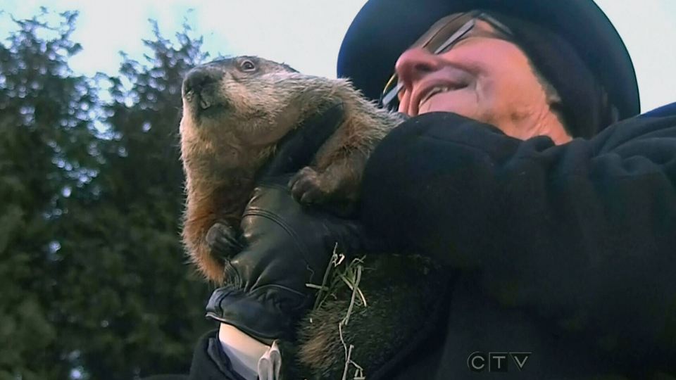 Punxsutawney Phil predicts early spring in Pennsylvania Saturday, Feb.2, 2013.