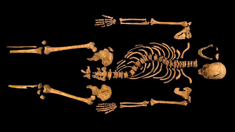 The remains found underneath a car park last September at the Grey Friars excavation in Leicester, which have been declared Monday 'beyond reasonable doubt' to be the long lost remains of England's King Richard III, missing for 500 years. (University of Leicester)