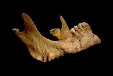 King Richard remains jaw DNA