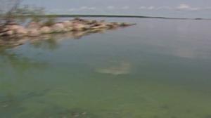 CTV News Channel: Lake Winnipeg dilemma