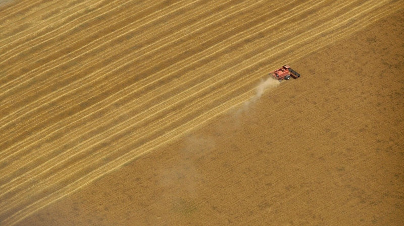 A combine harvests wheat in a field south of Chapman, Kan., on June 23, 2009. (AP / Charlie Riedel)