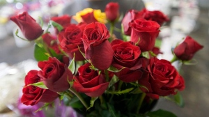 Don French, of Costa Mesa, Calif., shops for roses for his girlfriend for Valentine's Day at Orange County Wholesale Flowers in Santa Ana, Calif., Monday, Feb. 13, 2012. (Orange County Register / Ana Venegas)