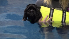canine hydrotherapy, dog pool