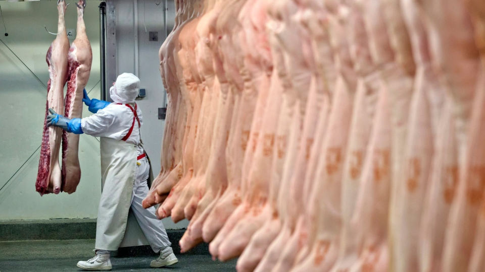 A worker handles animal carcasses at the Doly-Com abattoir, one of the two units checked by Romanian authorities in the horse meat scandal, in the village of Roma, northern Romania, Tuesday, Feb. 12, 2013.  (AP / Vadim Ghirda)