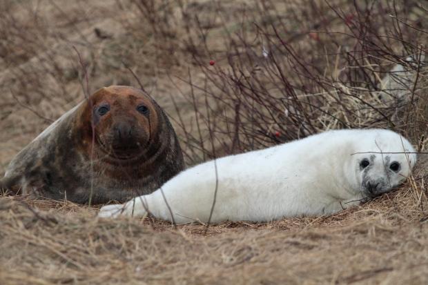 Seal generic