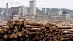 Logs are piled up at West Fraser Timber in Quesnel, B.C., Tuesday, April 21, 2009.  (Jonathan Hayward / THE CANADIAN PRESS)