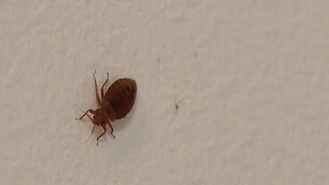 Experts Offer Advice For Guarding Against Bedbugs Ctv News Winnipeg