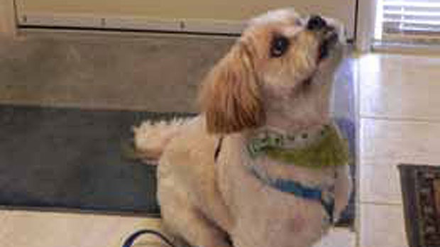 Nicky, dog rescued by Calgary Humane