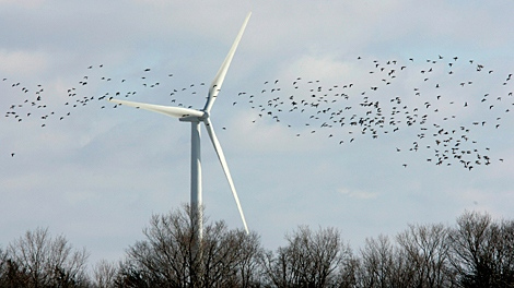 Flocks of ducks fly in front of a wind turbine in a field near Port Bruce, Ont. on the Lake Erie north shore, Thursday, Feb. 8, 2007. (Dave Chidley / CP PHOTO)