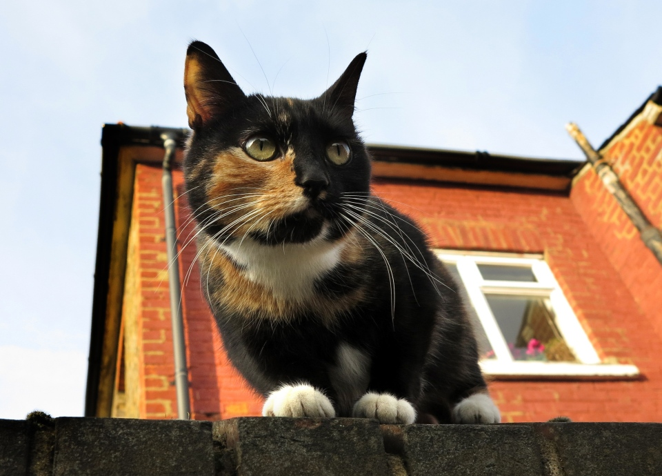 A cat sits on a wall in London, Thursday, Feb. 28, 2013. (AP Photo/Kirsty Wigglesworth)