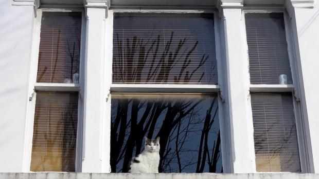 London Zoo cat map