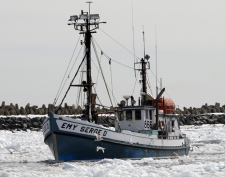 Seal hunters bring their boats back to the harbour at Cap-aux-Meule in Iles-de-la-Madeleine, Quebec,on Monday, March 31, 2008. (Ryan Remiorz / THE CANADIAN PRESS)