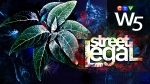W5 - Street Legal