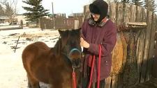 Patty Kramps, Patty's Pony Place