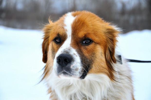 Dog/DOG1.jpg