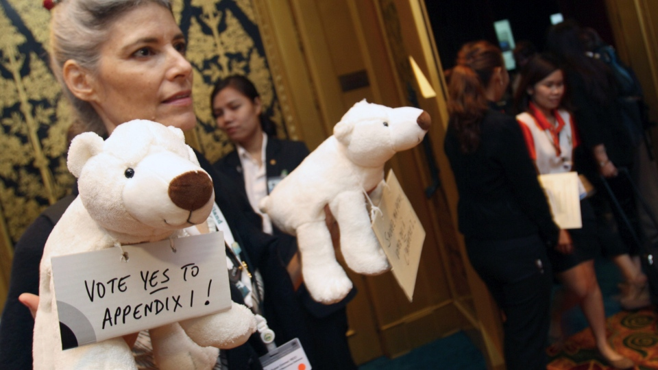A representative from a wildlife organization hands out stuffed polar bear dolls to delegates before they vote on a proposal by Washington to change the status of the polar bear from a species whose trade is merely regulated, not banned at the Convention on International Trade in Endangered Species, in Bangkok, Thailand Thursday, March 7, 2013.