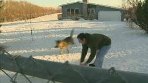 CTV Edmonton: RCMP investigating animal poisonings