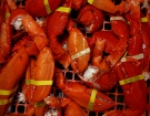 Cooked lobster claws and tails are seen in this photo taken Wednesday, Oct. 22, 2008. (AP / Pat Wellenbach)