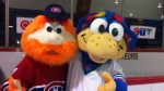 Youppi! and Jellybean