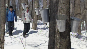 CTV Ottawa: Tapping into Spring with maple syrup