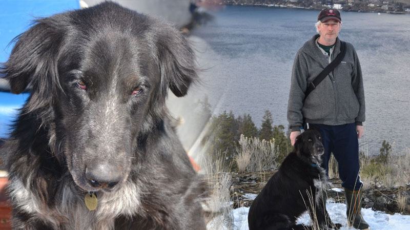 Lloyd Manchester's dog Jake was struck near a Boys and Girls Club in Kelowna on Feb. 28, 2013. (CTV)