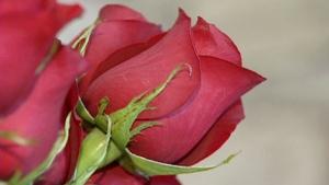 Roses generic
